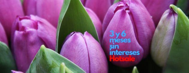tulipanes 3 y 6 meses sin intereses