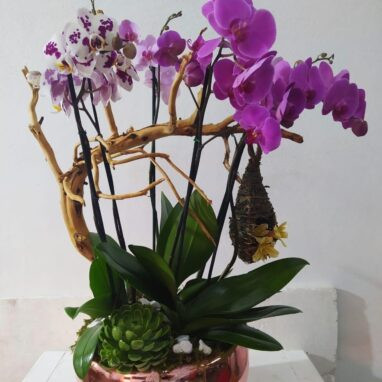 3 orquidea dobles mixtas